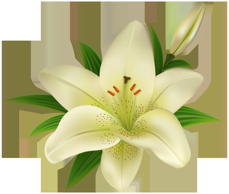 Lily flower transparent clipart svg freeuse download Lilium Amaryllis belladonna Clip art - Lilium Transparent Clip Art ... svg freeuse download