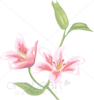 Lily graphics svg Wedding Lily Art, Lily Graphics, Lilly Graphics - The Printable ... svg