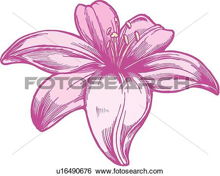 Lily graphics vector royalty free library Lily Clip Art Vector Graphics. 9,528 lily EPS clipart vector and ... vector royalty free library