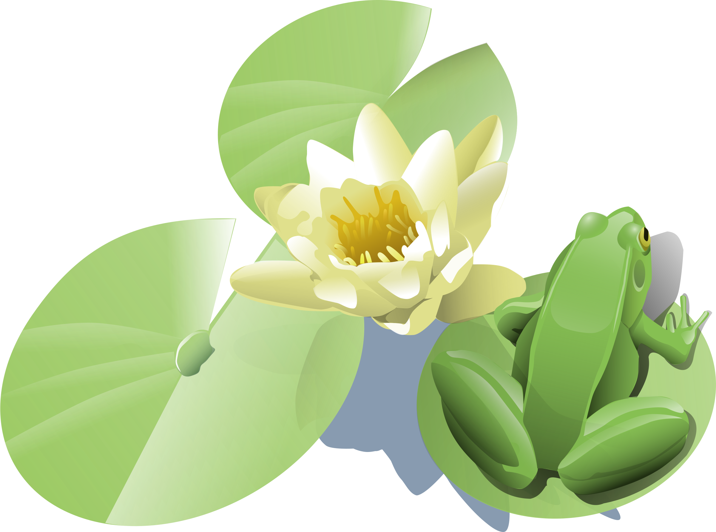 Water lily flower clipart picture transparent stock Clipart - Frog on a lily pad picture transparent stock