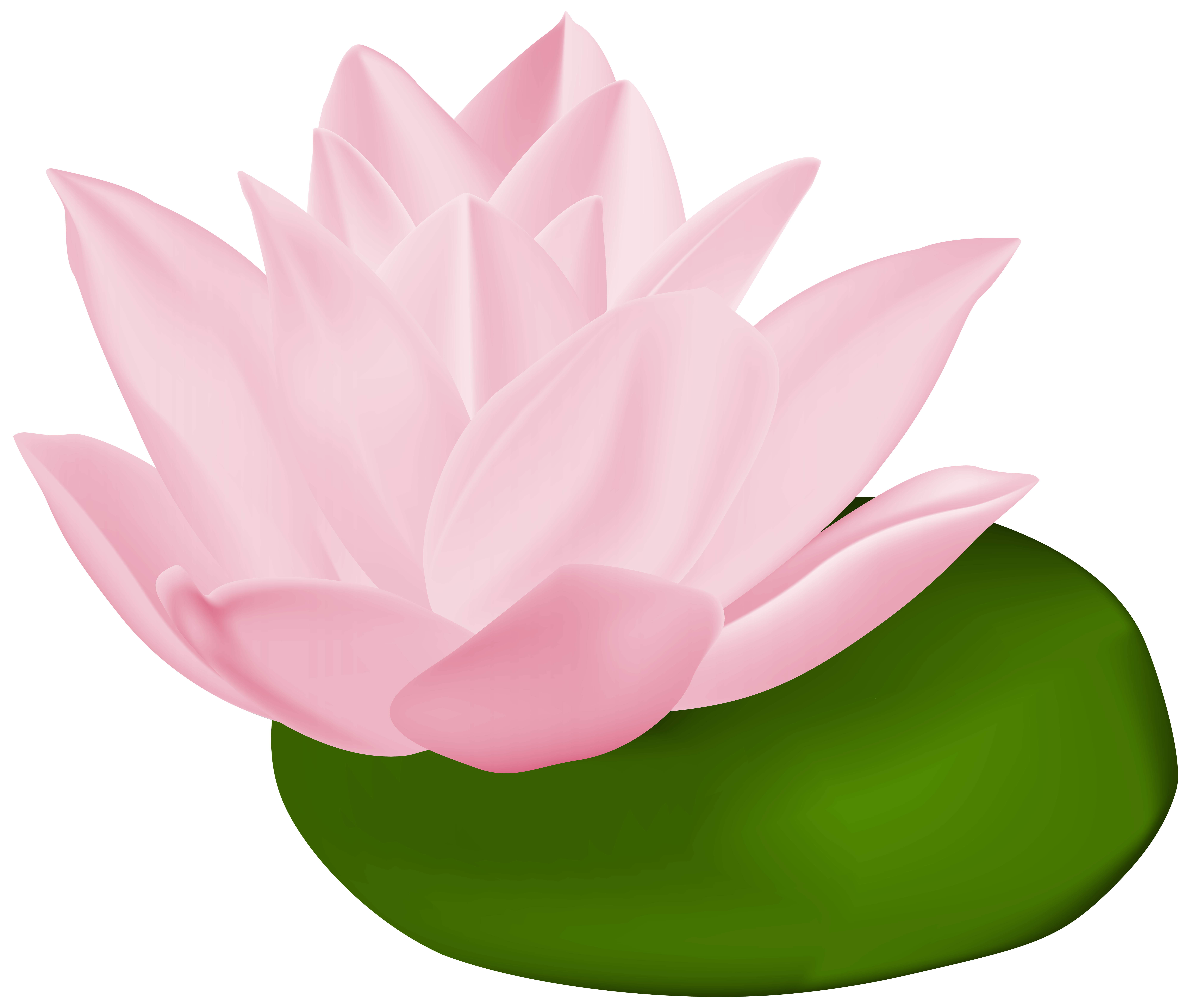 Lily pad flower clipart jpg royalty free Pink Water Lily Transparent PNG Clip Art Image | Gallery ... jpg royalty free