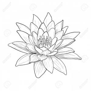 Lily pad flower clipart blach and white graphic black and white Water Lily Drawing Outline at PaintingValley.com | Explore ... graphic black and white