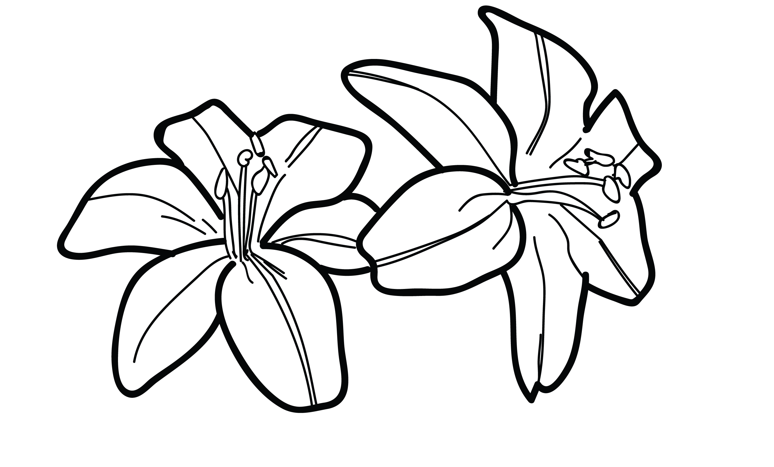 Lily pad flower clipart black and white royalty free download Black And White Lily Drawing at GetDrawings.com | Free for personal ... royalty free download