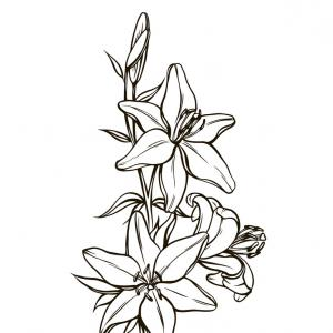 Lily stem flower black and white clipart picture freeuse download Lily Flower Clipart Black And White   SOIDERGI picture freeuse download