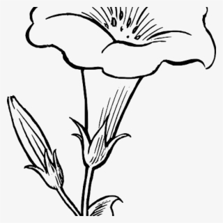 Lily stem flower black and white clipart banner Lily Flower PNG, Transparent Lily Flower PNG Image Free ... banner
