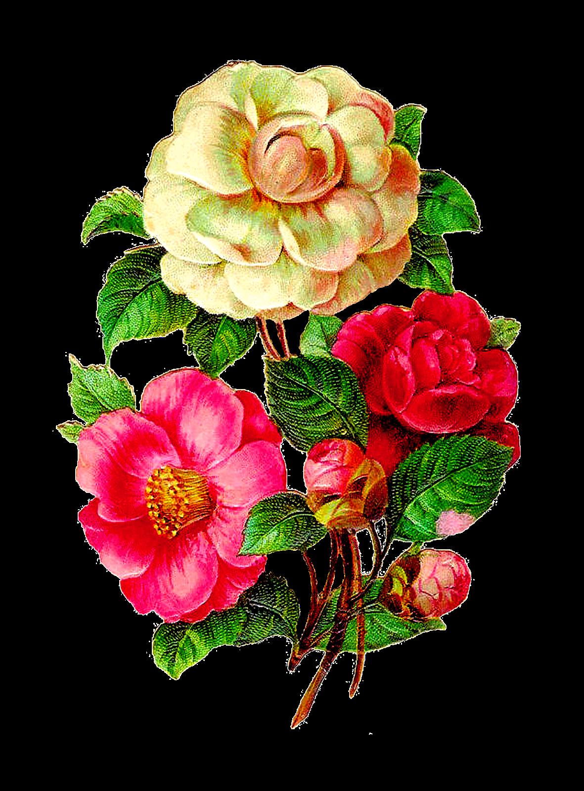 Strawberry flower clipart clip transparent download Afbeeldingsresultaat voor vintage flowers illustration | Pictures I ... clip transparent download