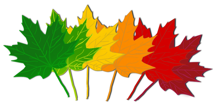 Line break leaves maple clipart page separator free library Free Autumn Divider Cliparts, Download Free Clip Art, Free ... free library