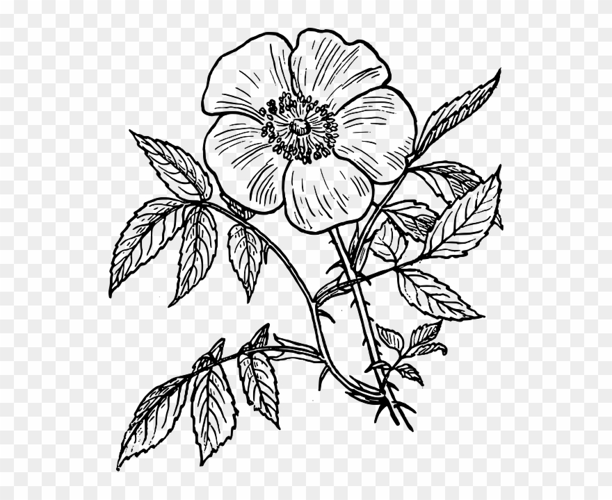 Line drawing of flowers clipart banner transparent stock Flowers Line Drawing - Day Of The Dead Flower Drawing ... banner transparent stock