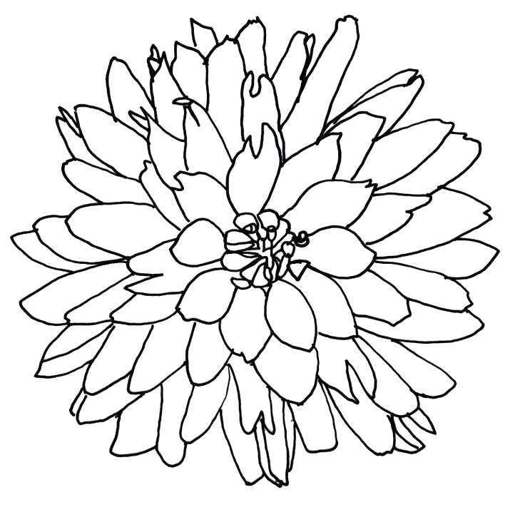 Line drawing of flowers clipart image black and white stock flower drawing clip art – golfpachuca.com image black and white stock