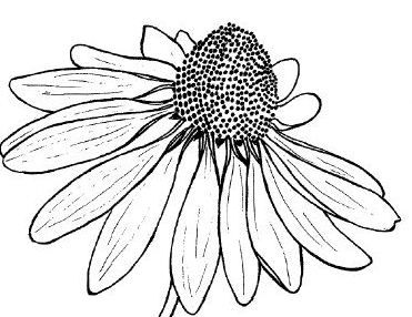 Line images of flowers jpg freeuse Top 25 ideas about Flower Line Drawings on Pinterest | Draw ... jpg freeuse
