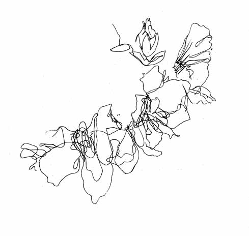 Line images of flowers vector library download 17 best ideas about Flower Line Drawings on Pinterest | Draw ... vector library download