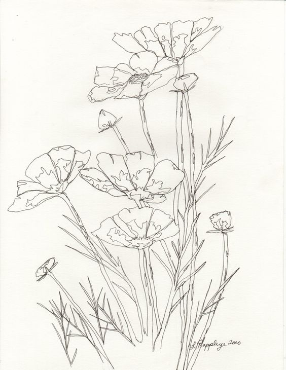 Line images of flowers image black and white stock Flower Line Drawing | Line Drawings | Pinterest | Drawing flowers ... image black and white stock
