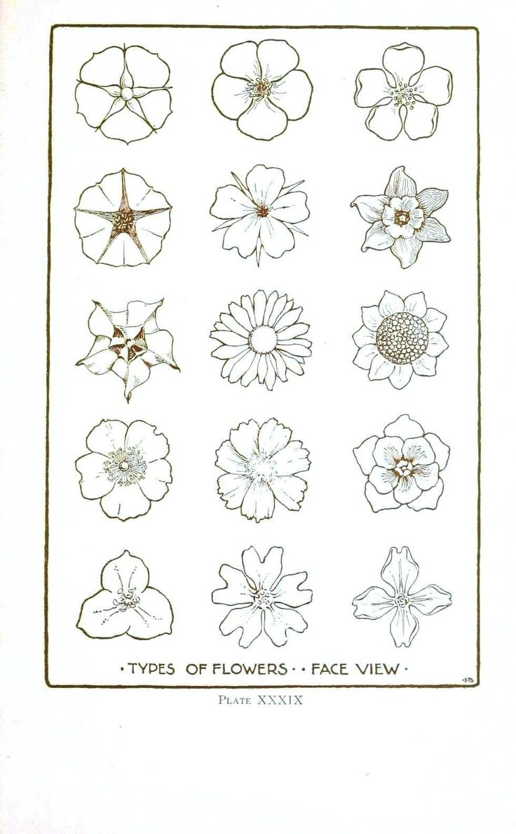 Line images of flowers png transparent download Top 25 ideas about Flower Line Drawings on Pinterest | Draw ... png transparent download
