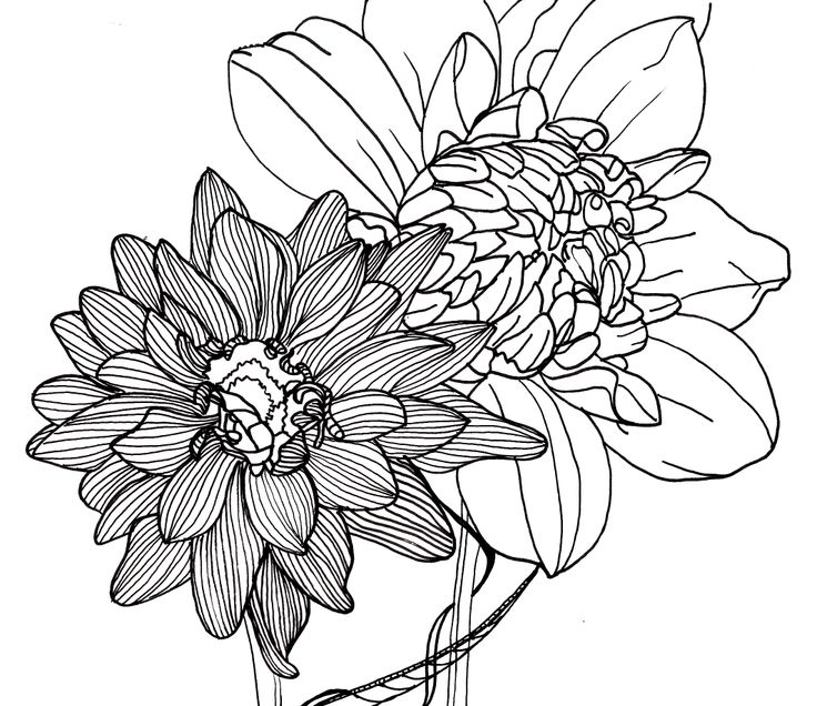 Line images of flowers black and white library Line images of flowers - ClipartFest black and white library
