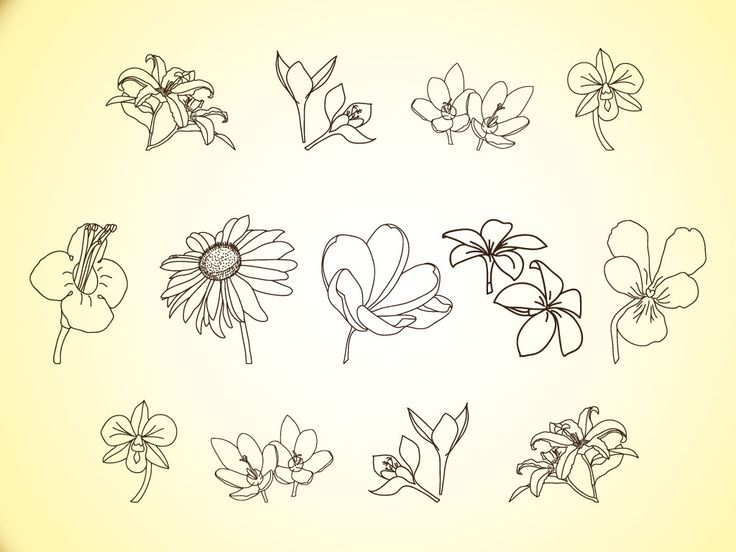 Line images of flowers jpg Top 25 ideas about Flower Line Drawings on Pinterest | Draw ... jpg