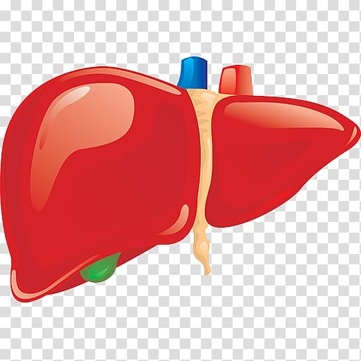 Liver clipart png picture black and white Liver Human body Organ Anatomy Homo sapiens, others transparent ... picture black and white