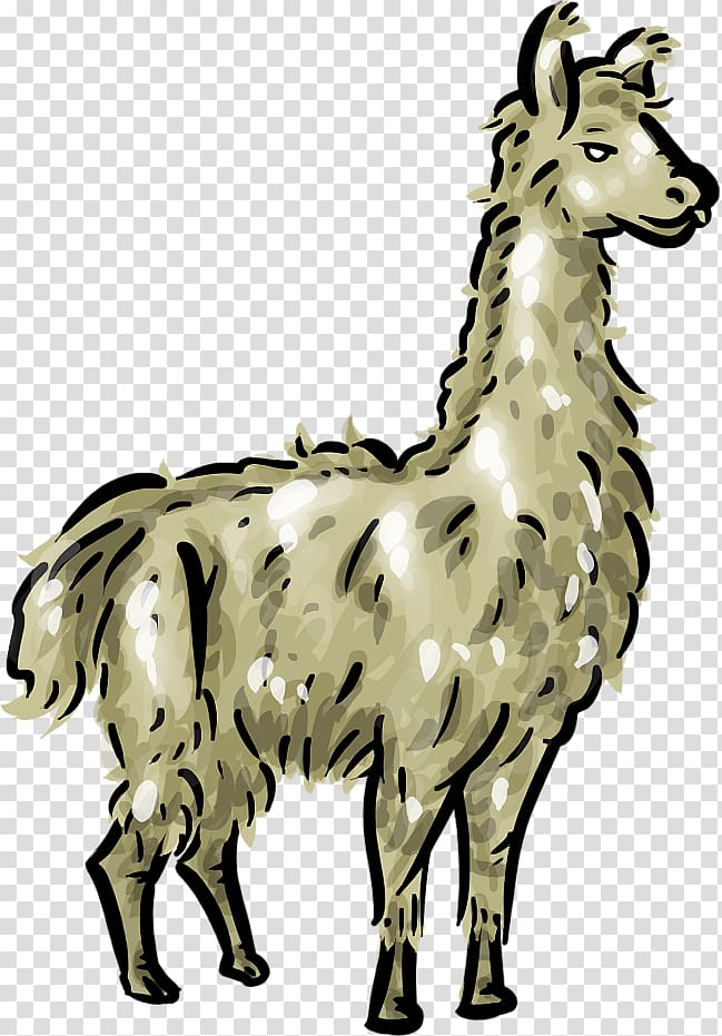 Llama head clipart with out background clipart transparent Llama , Llama Head transparent background PNG clipart | HiClipart clipart transparent