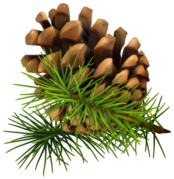 Loblolly pine tree branch clipart graphic freeuse library Pine cone PNG image free download graphic freeuse library