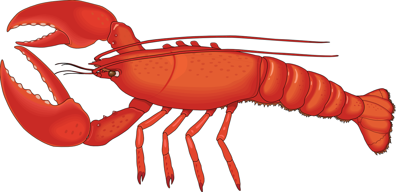 Lobsster clipart banner library stock Lobster Clip Art Images | Clipart Panda - Free Clipart ... banner library stock