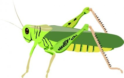 Clipart saltamontes clip art free library Free Grasshopper Locust Clipart and Vector Graphics - Clipart.me clip art free library