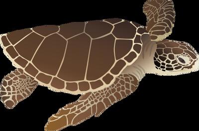 Loggerhead turtle clipart svg transparent stock Free Scientific Illustrattion Of Image Of A Sea Turtle, Download ... svg transparent stock