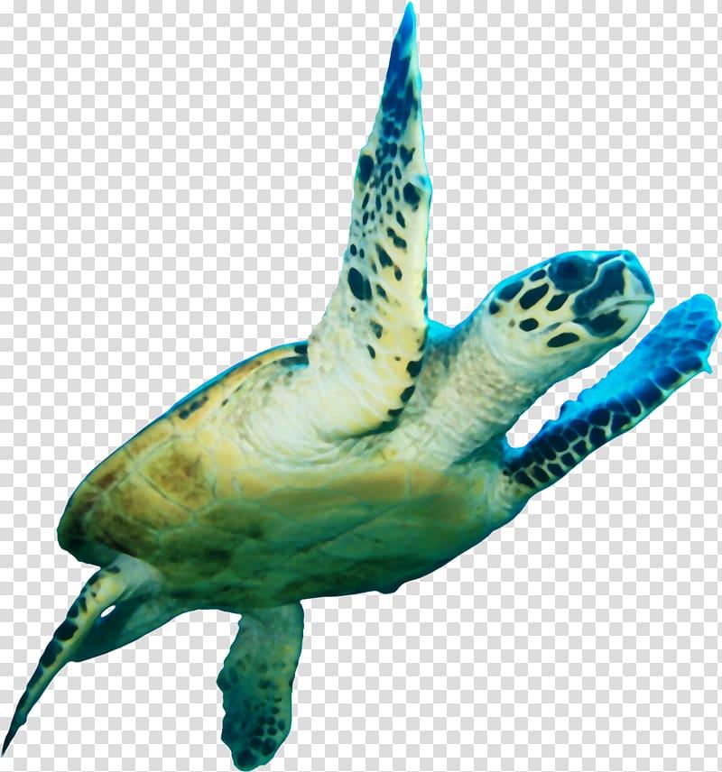 Loggerhead turtle clipart clip black and white Green turtle, Loggerhead sea turtle Icon, Sea turtle transparent ... clip black and white