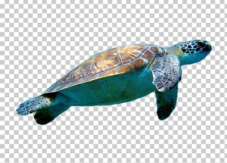 Loggerhead turtle clipart clipart transparent Loggerhead Sea Turtle Cheloniidae PNG, Clipart, Animal, Client, Dots ... clipart transparent