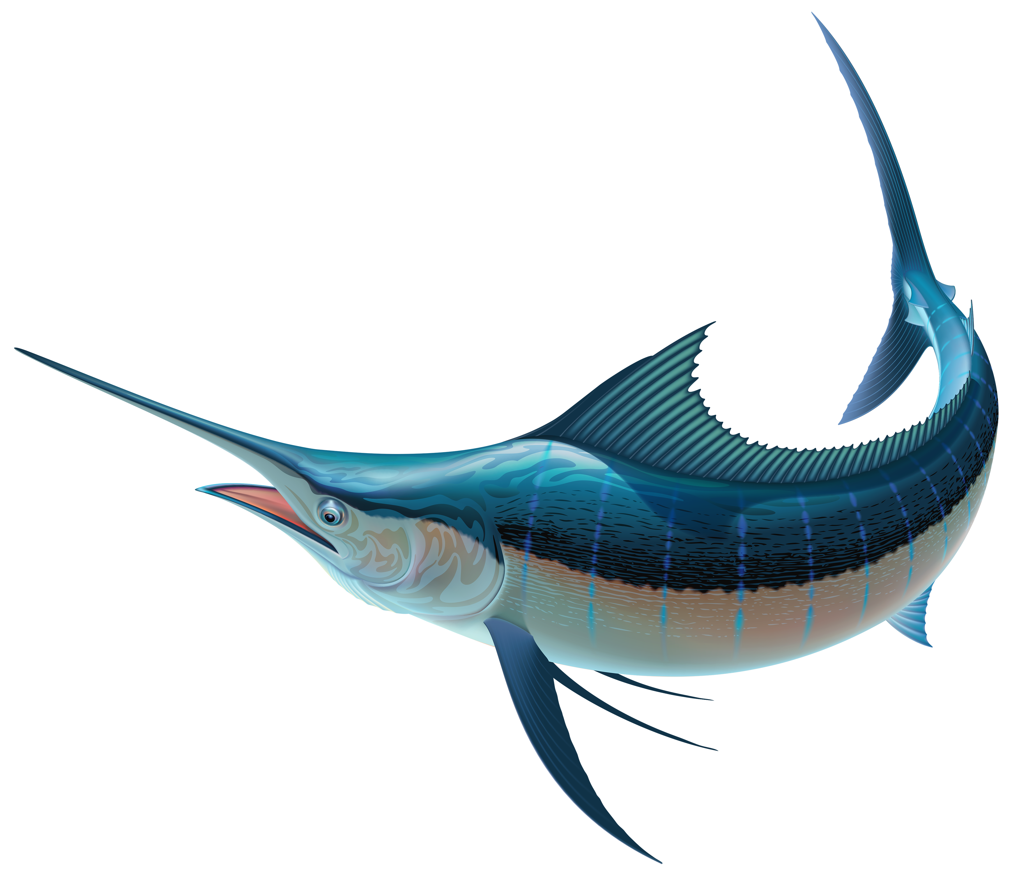 Long fish clipart banner royalty free download Swordfish PNG Clipart - Best WEB Clipart banner royalty free download