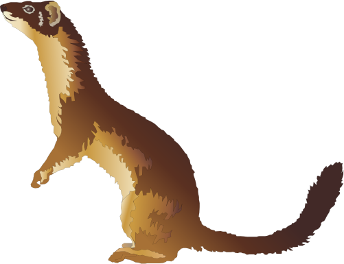 Long tailed weasel clipart png royalty free download Weasel Clipart Free | Clipart Panda - Free Clipart Images | animal ... png royalty free download