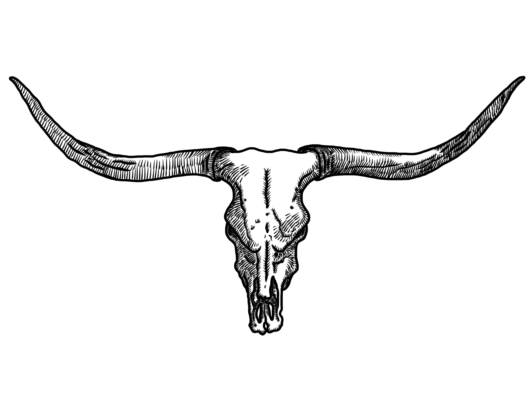 Longhorn steer head clipart banner black and white Free Longhorn Cattle Cliparts, Download Free Clip Art, Free ... banner black and white