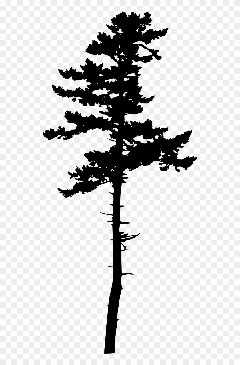 Longleaf pine clipart picture royalty free stock Free Download - Longleaf Pine Tree Silhouette, HD Png Download ... picture royalty free stock