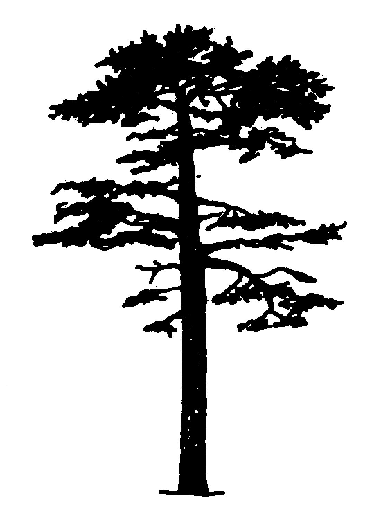Longleaf pine clipart vector black and white library Pine Trees Silhouette | Clipart Panda - Free Clipart Images ... vector black and white library