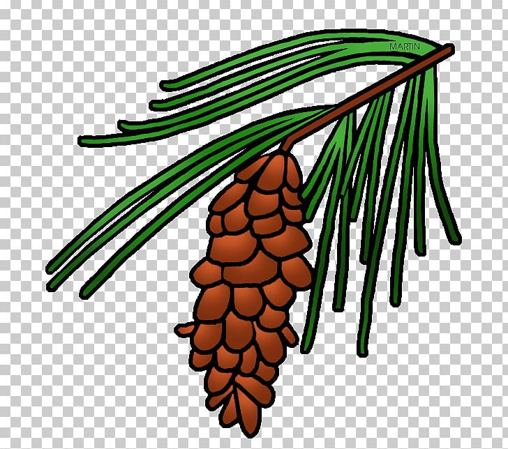 Longleaf pine clipart clip art black and white stock Longleaf Pine Loblolly Pine Conifer Cone Tree PNG, Clipart, Artwork ... clip art black and white stock