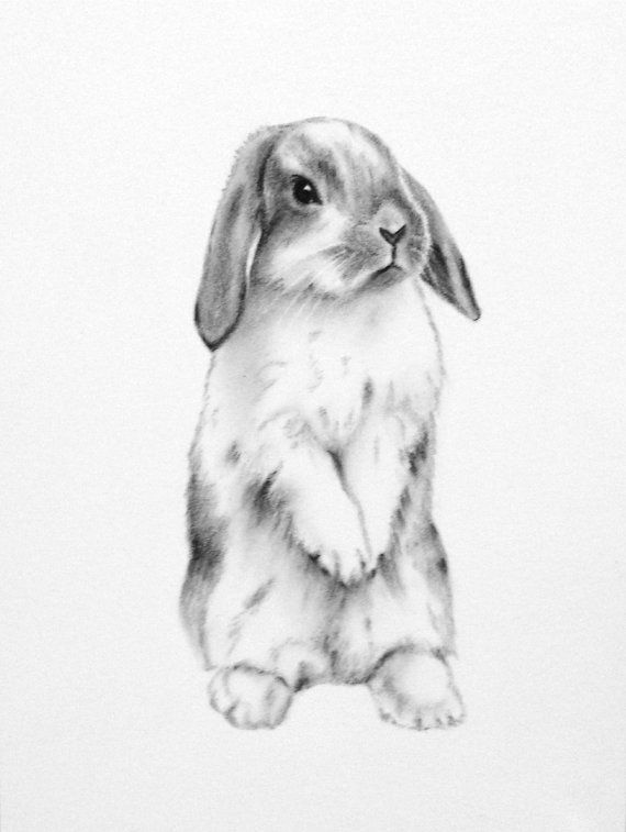Lop eared rabbit clipart transparent library Bunny clipart mini lop, Bunny mini lop Transparent FREE for ... transparent library