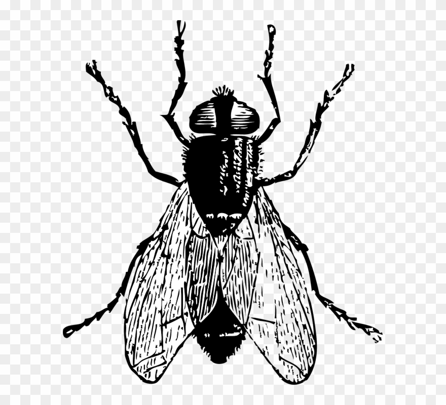 Lord of the flies black and white clipart graphic freeuse stock Black Horse Fly Png Clipart - Flies Black And White ... graphic freeuse stock