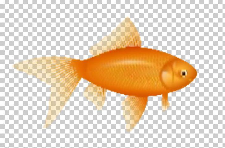 Lossy clipart compression graphic freeuse download Fish Lossy Compression PNG, Clipart, Animals, Bony Fish ... graphic freeuse download