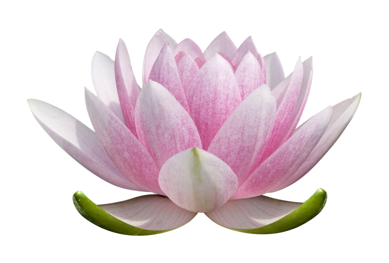 Lotus flower clipart no background png freeuse download Lotus Flower PNG images free download png freeuse download