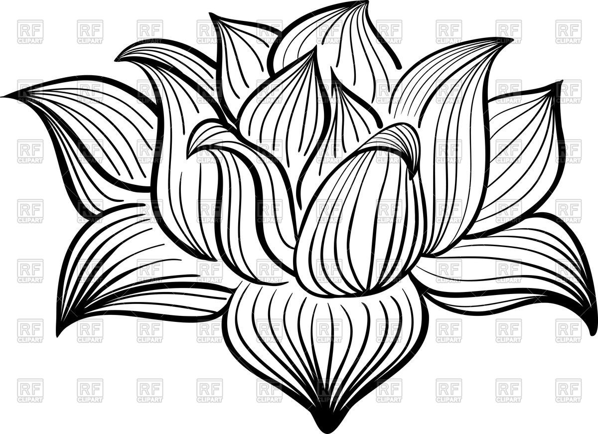 Lotus flower outline clipart free clipart freeuse Outline of Lotus flower Vector Image – Vector illustration ... clipart freeuse