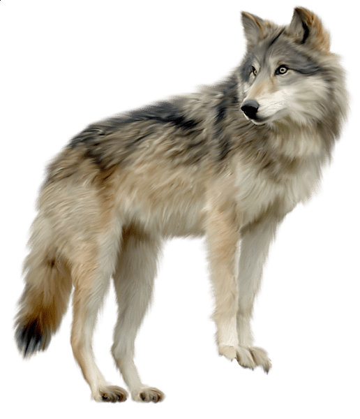 Loup clipart png transparent library Clipart loup 2 » Clipart Portal png transparent library