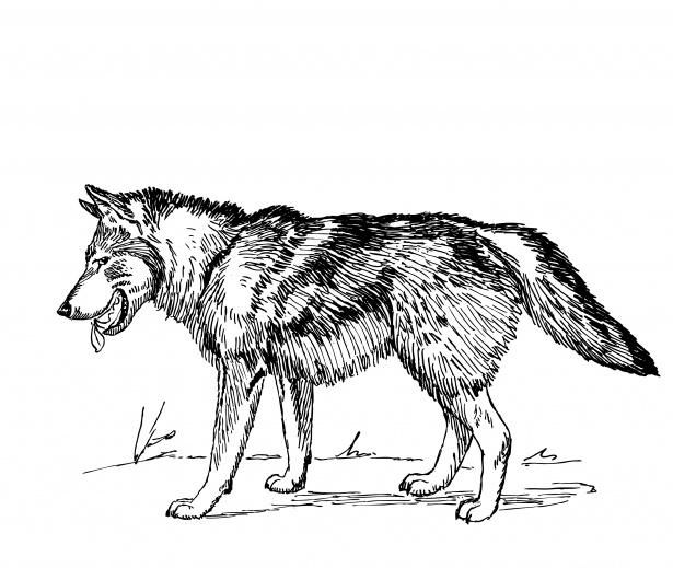 Loup clipart jpg Loup Clipart Illustration Photo stock libre - Public Domain ... jpg