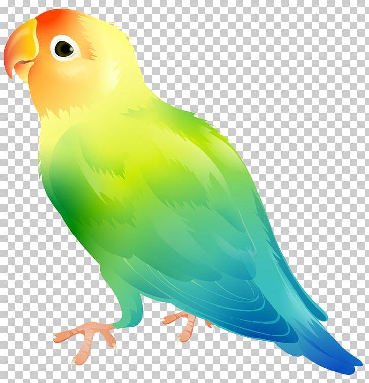 Lovebird clipart clip art library download Lovebird Parrot PNG, Clipart, Beak, Bird, Birds, Budgerigar ... clip art library download