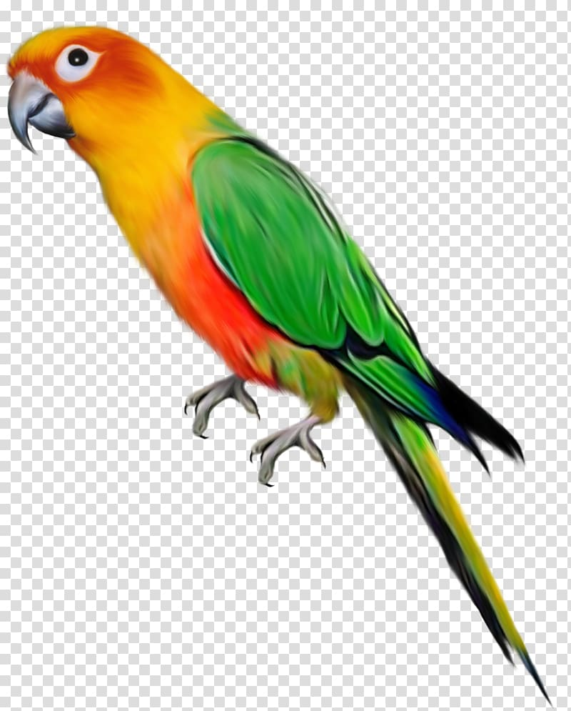 Lovebird clipart clip library Parrot Lovebird , transparent background PNG clipart | HiClipart clip library