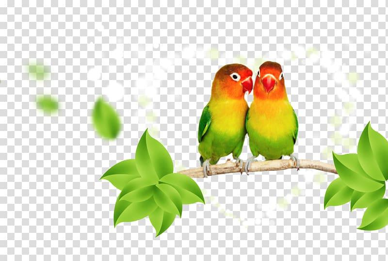 Lovebird clipart image transparent stock Green-and-yellow lovebirds , Parrot Lovebird Budgerigar ... image transparent stock
