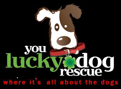 Lucky dog clipart clipart freeuse You Lucky Dog Rescue | youluckydogrescue.org clipart freeuse