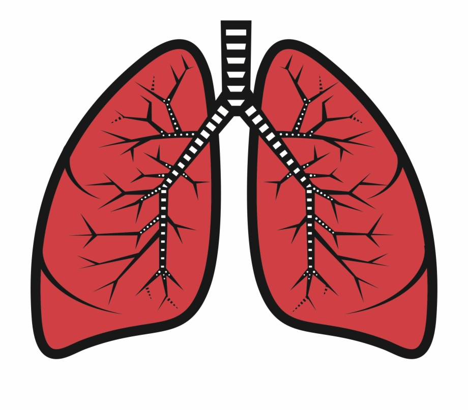 Lungs clipart picture library library Lungs Clipart, Transparent Png Download For Free #1538538 - Trzcacak picture library library