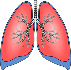 Lungs clipart vector transparent stock Lungs Clip Art at Clker.com - vector clip art online, royalty free ... vector transparent stock