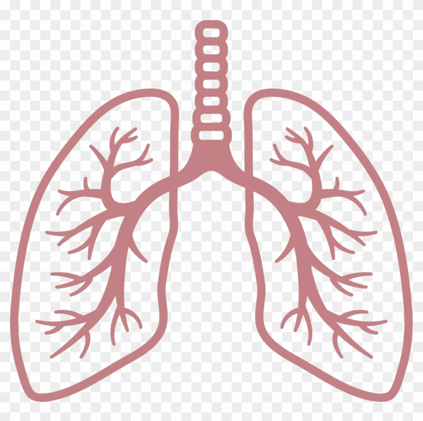 Lungs clipart clip art library download Lungs Clipart No Background, HD Png Download - 1504x1428(#2571745 ... clip art library download
