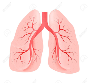 Lungs clipart picture transparent download Smoking Lungs Clipart   Free Images at Clker.com - vector clip art ... picture transparent download