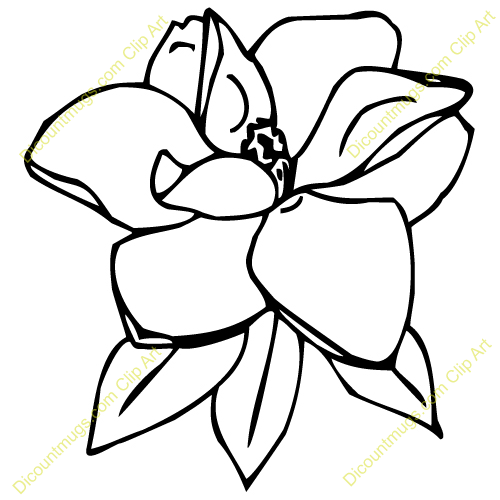Magnolia clipart black and white graphic transparent stock Magnolia Flower Clip Art | Art - Reference Magnolia | Flower ... graphic transparent stock