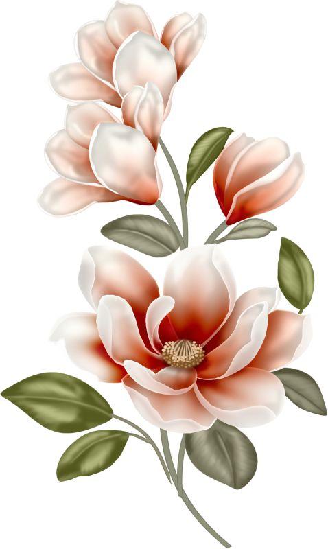 Magmolia clipart png transparent Magnolia Flower Clipart   Free download best Magnolia Flower ... png transparent